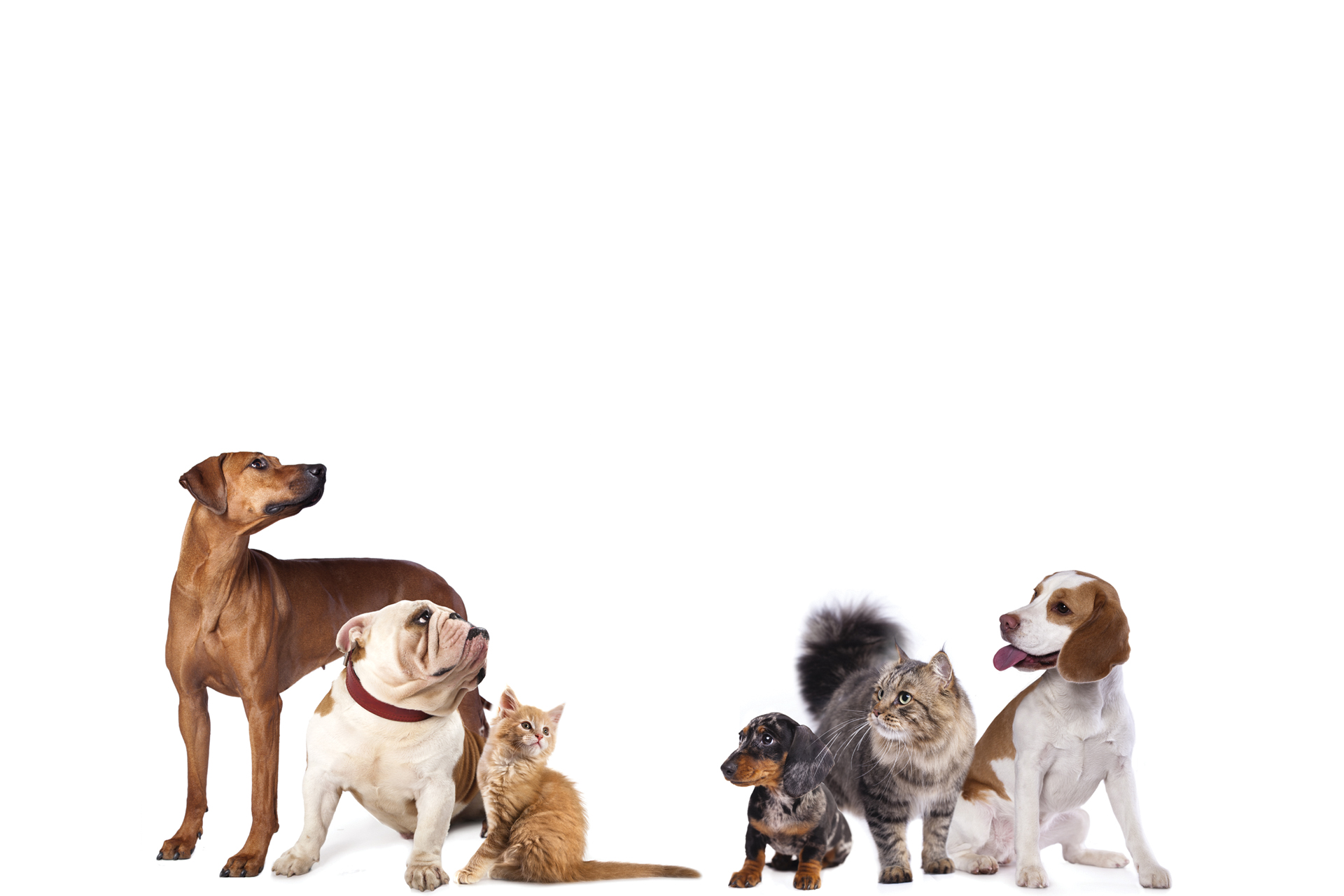 Animal shelters and rescues need great animal shelter fundraising ideas. Shoe drive fundraisers can help!