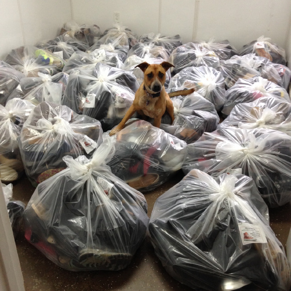 Find out why a shoe drive fundraiser is a great answer for animal shelter fundraisers